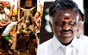 Breaking: Jallikattu Dates announced!! | Will CM OPS attend Jallikattu this time?