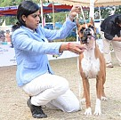 Madras Canine Club Dog Show at YMCA