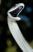 India's most deadliest snakes