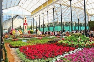 Bengaluru flower show have 30k visitors in single day