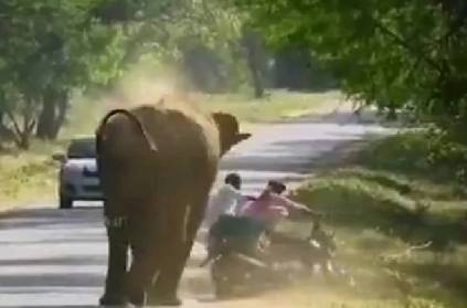 elephant charges at bike forces rider to run in hairraising video