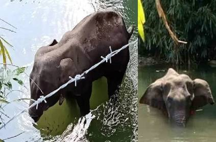Truth behind the Death of Elephant in Kerala; What really Happened?