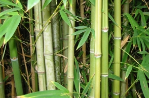 Union Budget 2018-19: National Bamboo Mission gets Rs 1,290 crore