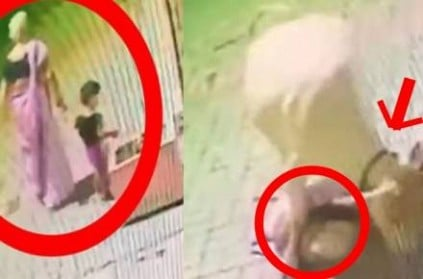 video: 70-year-old grandma killed by cow while saving grandson