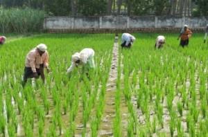 Karnataka waives crop loan up to Rs 50,000 per farmer