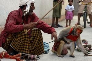 Nursery school holds monkey dance, Maneka Gandhi intervenes