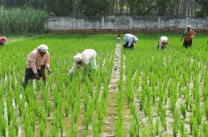 SC stays Madras HC order directing TN govt to waive all crop loans