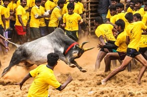 Ahead of Jallikattu, Madurai district collector issues major clarification