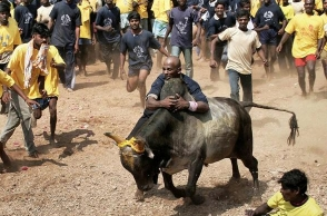 AWBI's major guideline to follow before Jallikattu