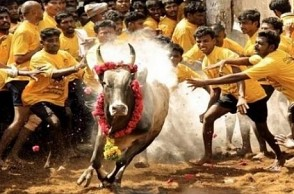 Proud moment! Famous TN town hosts Jallikattu after three-year gap
