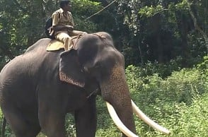 Kumki deployed in this area – Here's why