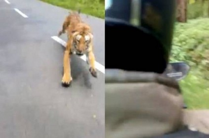 Video of tiger chasing biker goes viral on internet, Watch Here