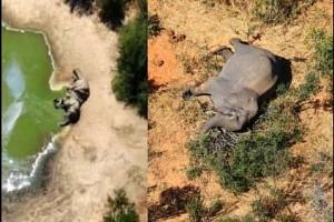 Around 360 Elephants Die MYSTERIOUSLY in this Place! What has the Police Found out so Far? Report