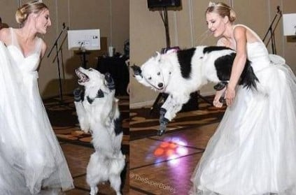 Dog trainer Sara Carson danced with her dog Hero at her wedding