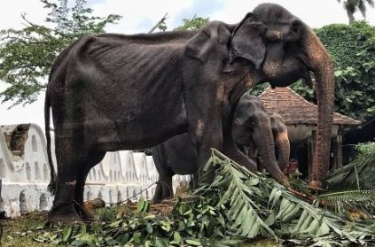 Elephant Who\'s Skeleton Photo Went Viral, passes away