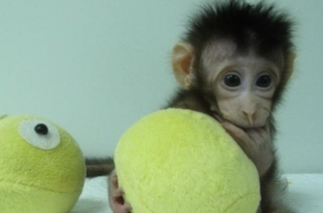 Pictures of first monkey clones going viral