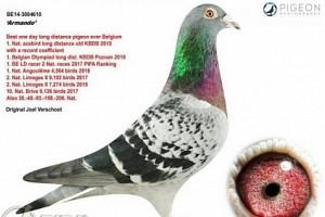 Unbelievable!!! A pigeon sold for more than a million in an auction