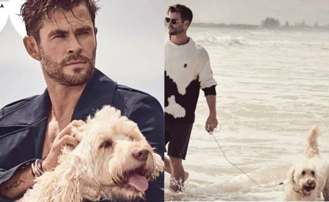 Chris Hemsworth of Extraction fame congratulates his dog
