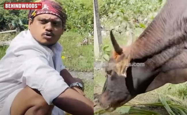 Cook with Comali Pugazh interaction with a cow goes viral