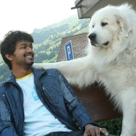 Vijay adorable throwback pic with dog on Villu sets