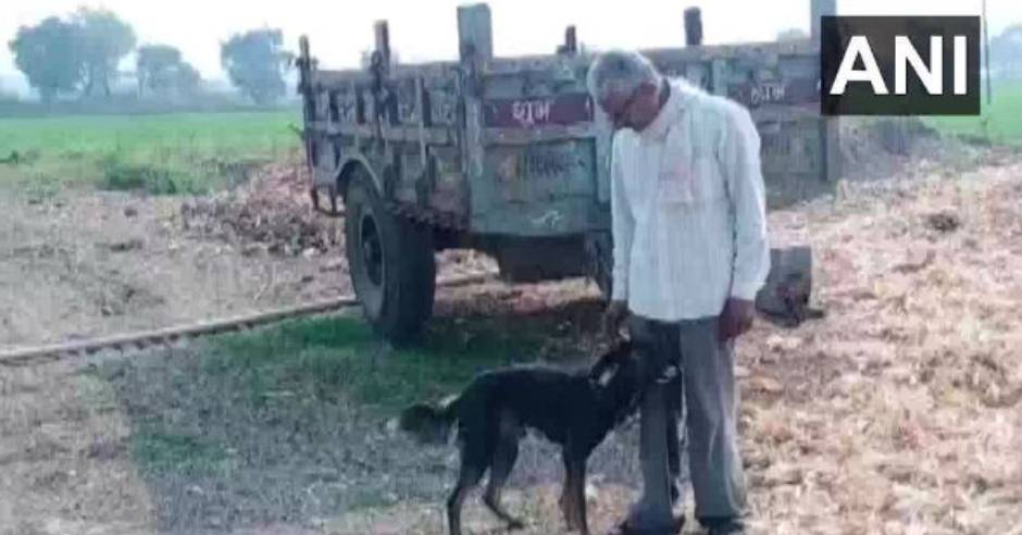 Man gives half his property to his pet dog in will